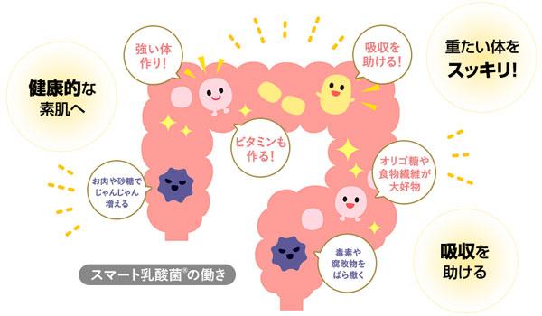 スマート乳酸菌の働き